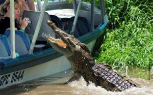 costa rica crocodile tour