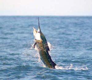 costa-rica-sports-fishing 1